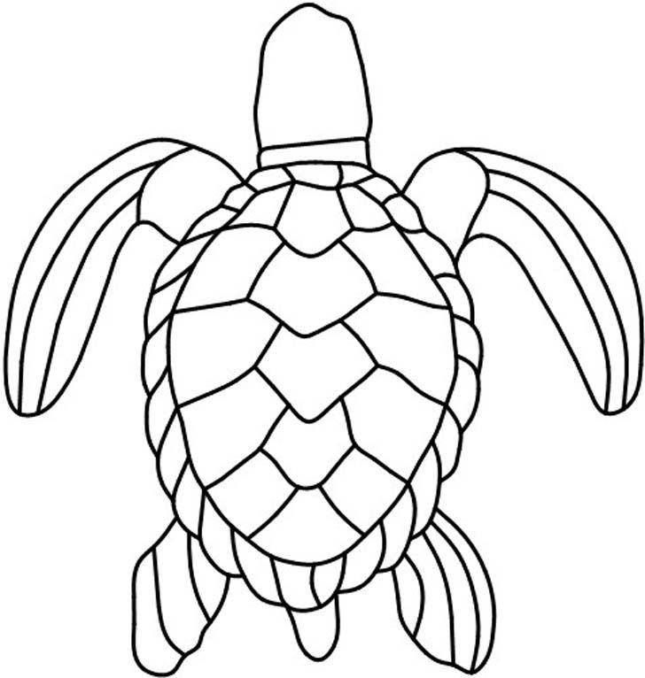 728x766 Turtle Shell Pattern Drawing