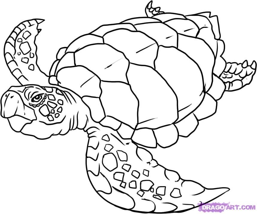 858x714 Sea Turtle Drawing Pictures How To Draw A Turtle, Step By Step