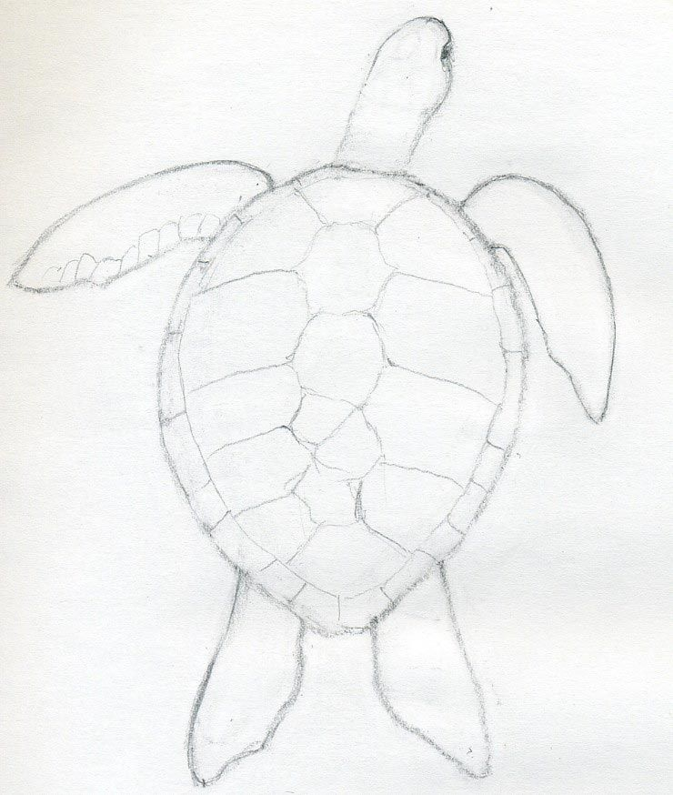 740x874 By A Weak Pencil Line, Draw The Outline Of Scutes Those Are