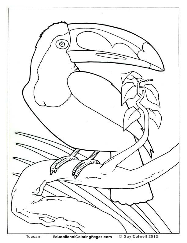 612x792 Toucan Coloring Pages, Birds Colouring Pages Colouring Pages