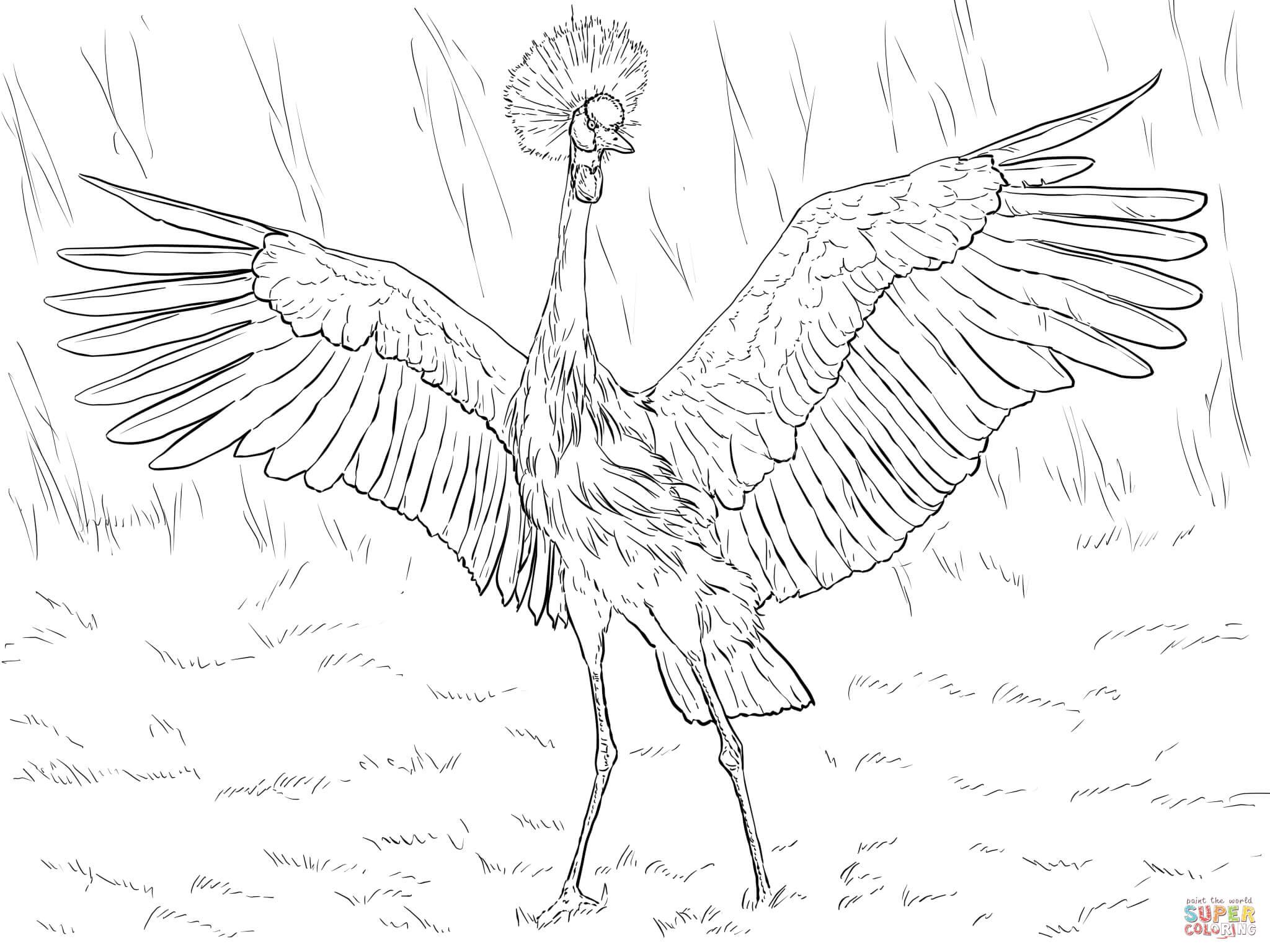 2048x1536 African Black Crowned Crane Coloring Page Free Printable