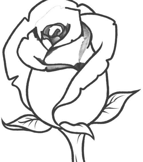 Drawing Of A Large Red Rose To Trace For Painting