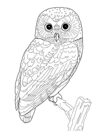 420x534 The Best Owl Sketch Ideas On Owl Drawings, Owl