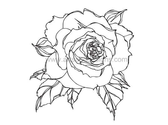 538x400 Romantic Rose Digital Stamp