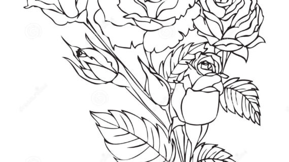 570x320 Rose Flower Outline Drawing Neo Traditional Rose Outline By