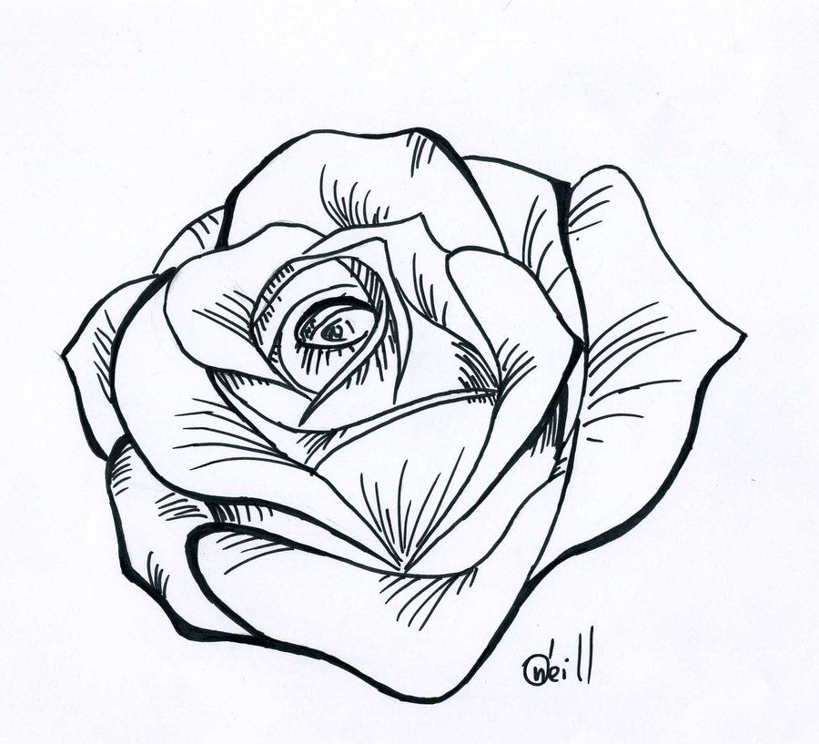 900x817 Traditional Rose Line Drawing Ltbgtline Drawing Roseltgt