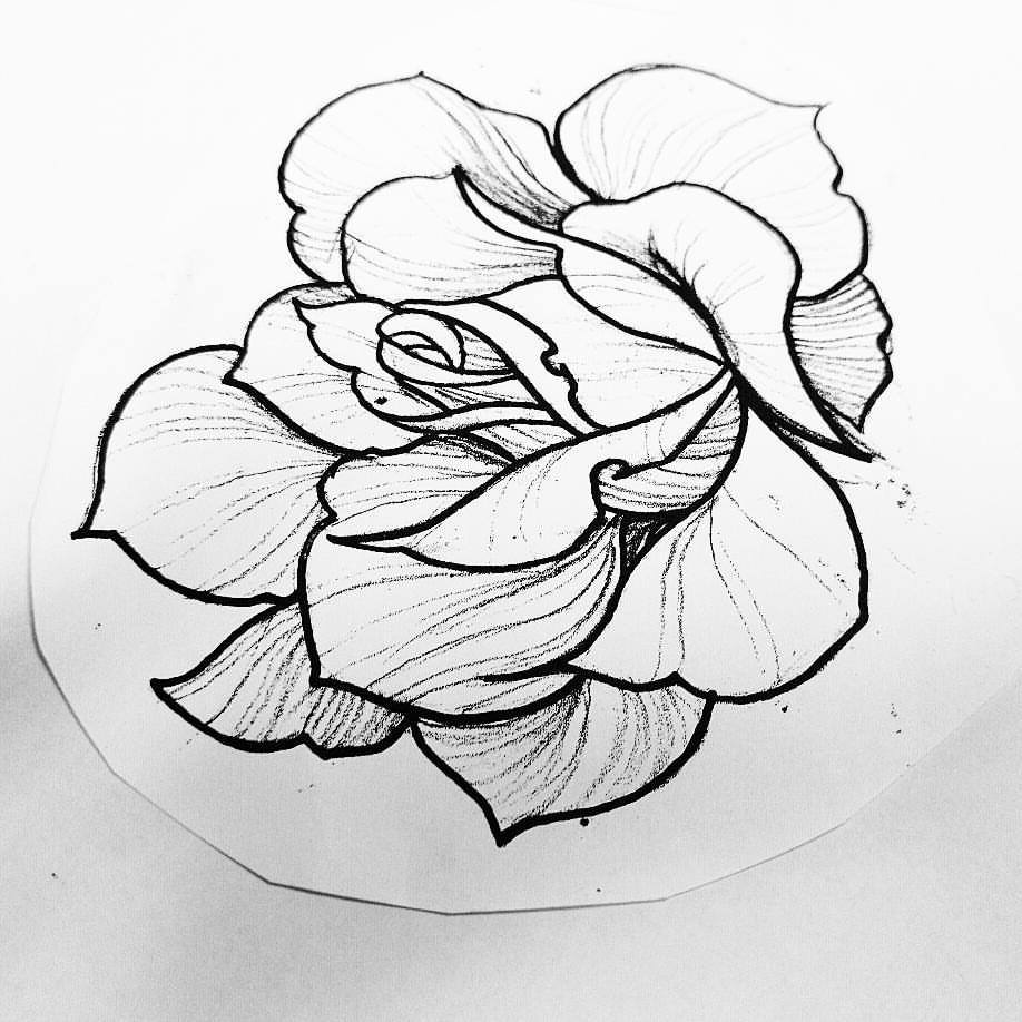 918x918 Cvet Available To Tattoo Traditional Rose Scratchline Tattoo