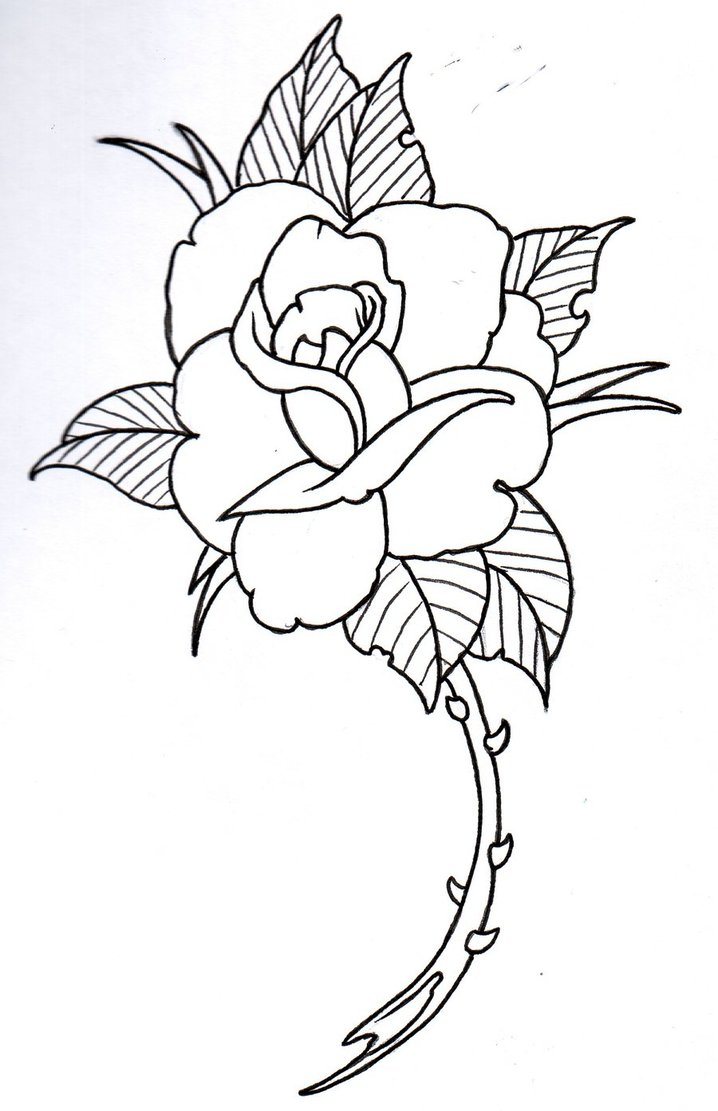 718x1111 Rose Drawing Outline 339 Rose Drawing Outline Tattoos