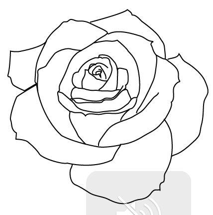 428x431 Png Rose Outline Transparent Rose Outline.png Images. Pluspng
