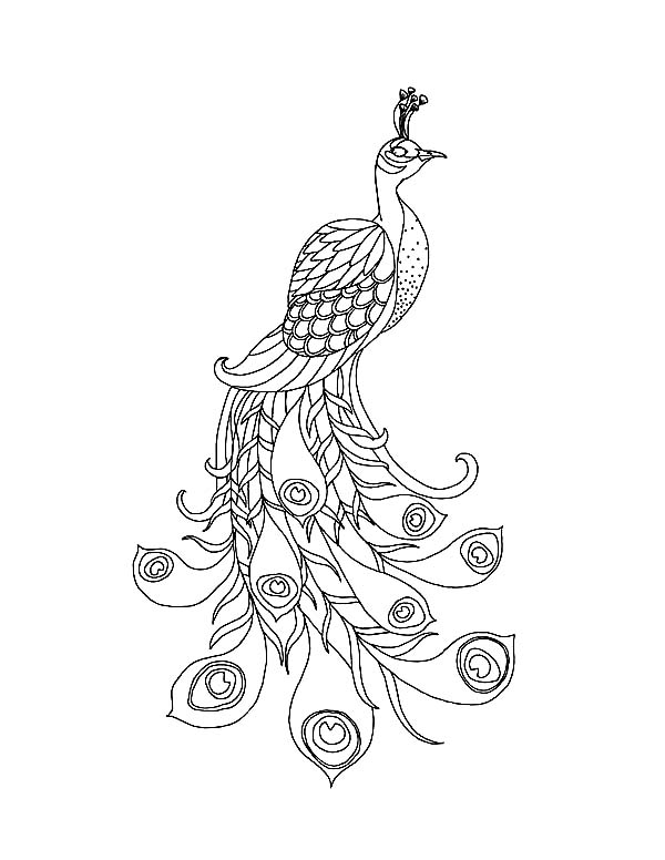 600x776 Peacock, A Beautiful Peacock With His Long Train Coloring Page