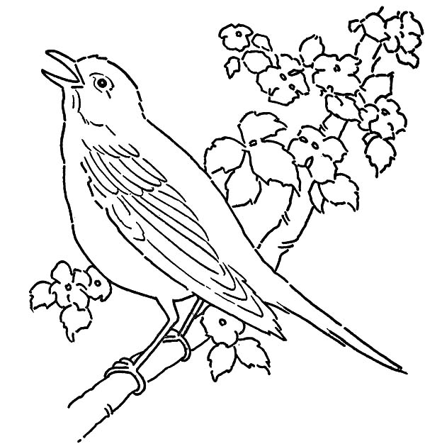 600x626 Canary Bird Singing Tree Coloring Pages Canary Bird Singing