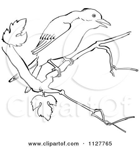 450x470 Cartoon Of A Retro Vintage Black And White Mockingbird In A Tree