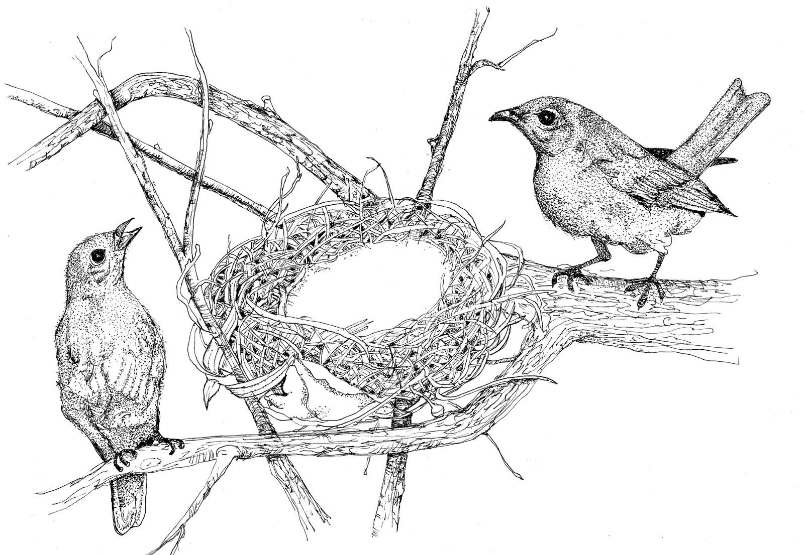 1600x1106 Julie Townsend Studio Two Little Birdies Sitting In A Tree