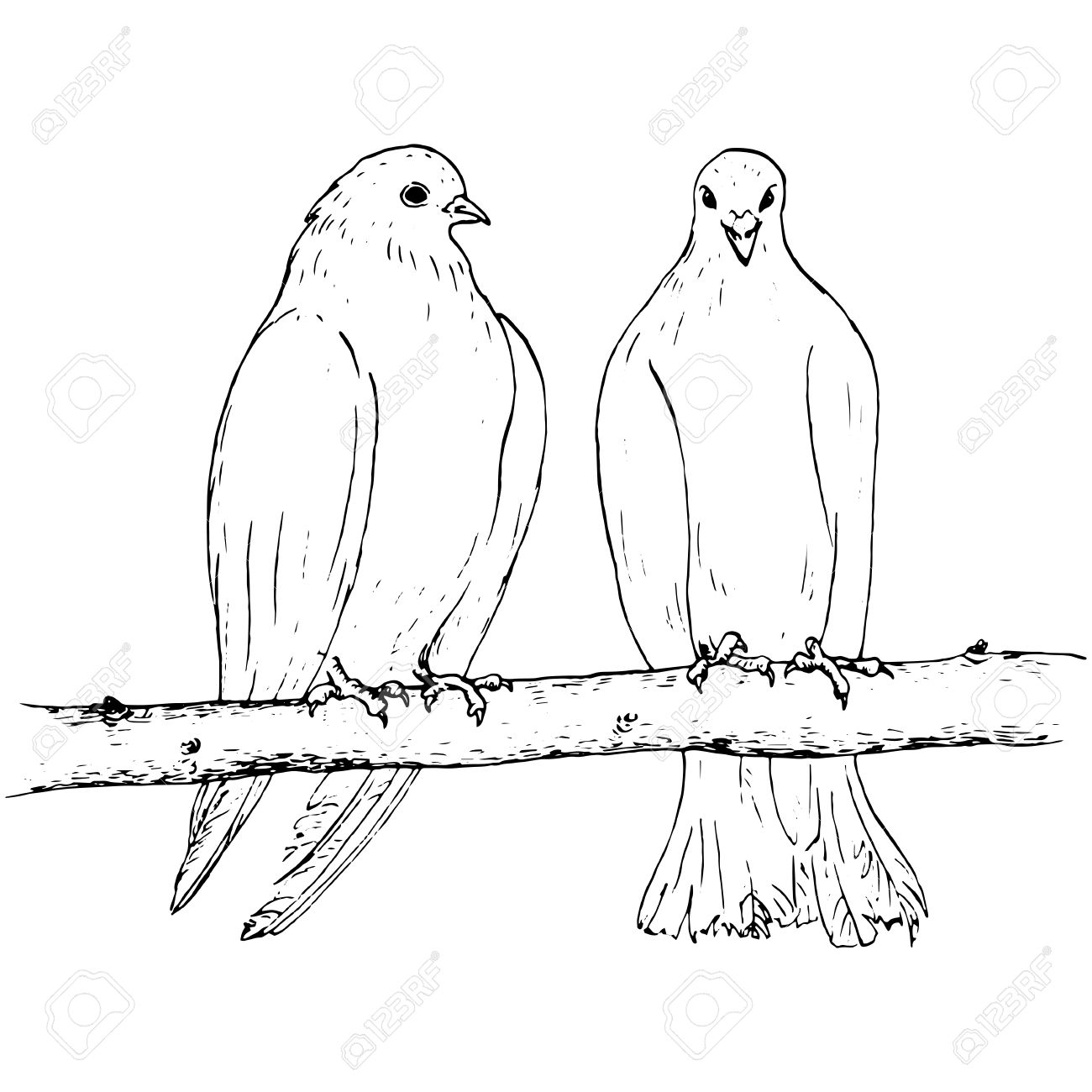 1300x1300 Pair Of Pigeons Sitting On The Branch, Two Doves At Tree, Ink