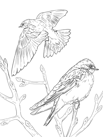 360x480 Realistic Tree Swallows Coloring Page Free Printable Coloring Pages