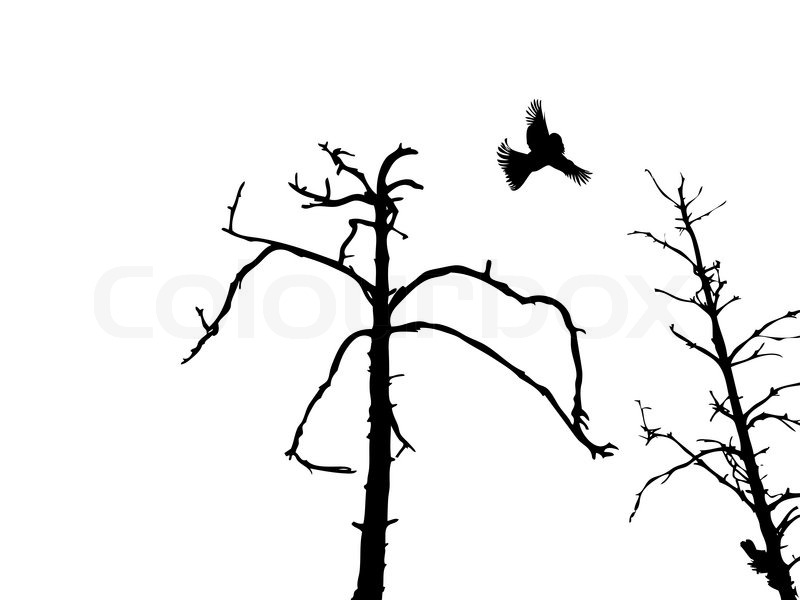800x600 Silhouette Dry Tree And Birds Isolated On White Background Stock