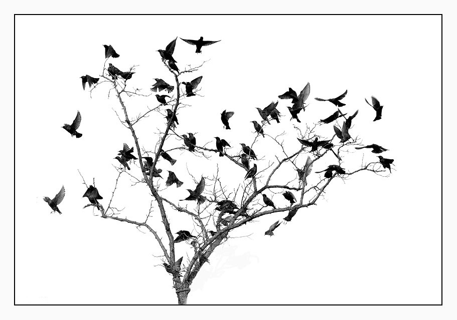 how to get rid of starlings in trees