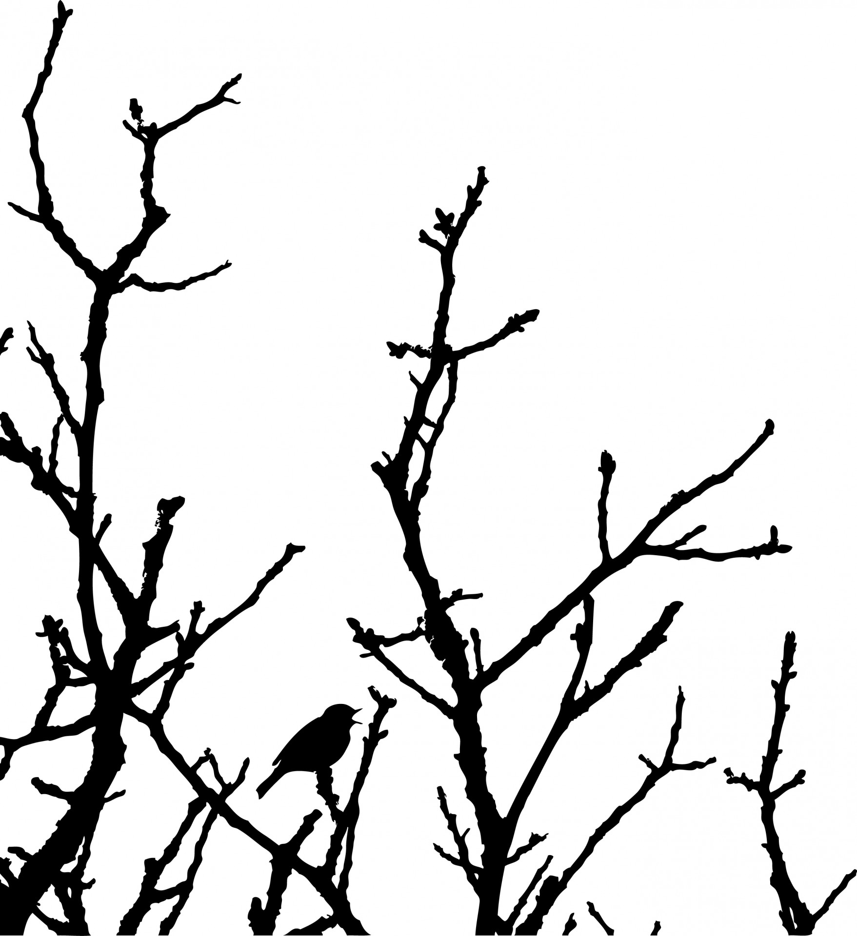 1757x1920 Bird In Tree Silhouette Free Stock Photo