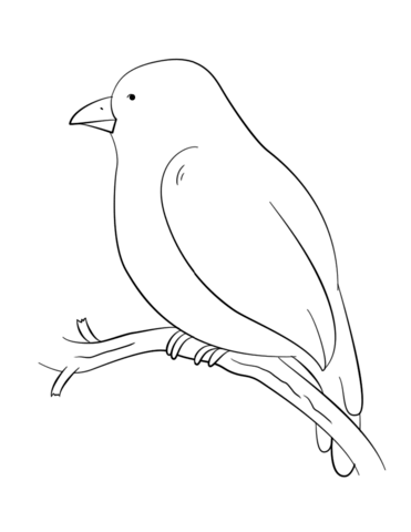 371x480 Bird Perching On A Tree Branch Coloring Page Free Printable