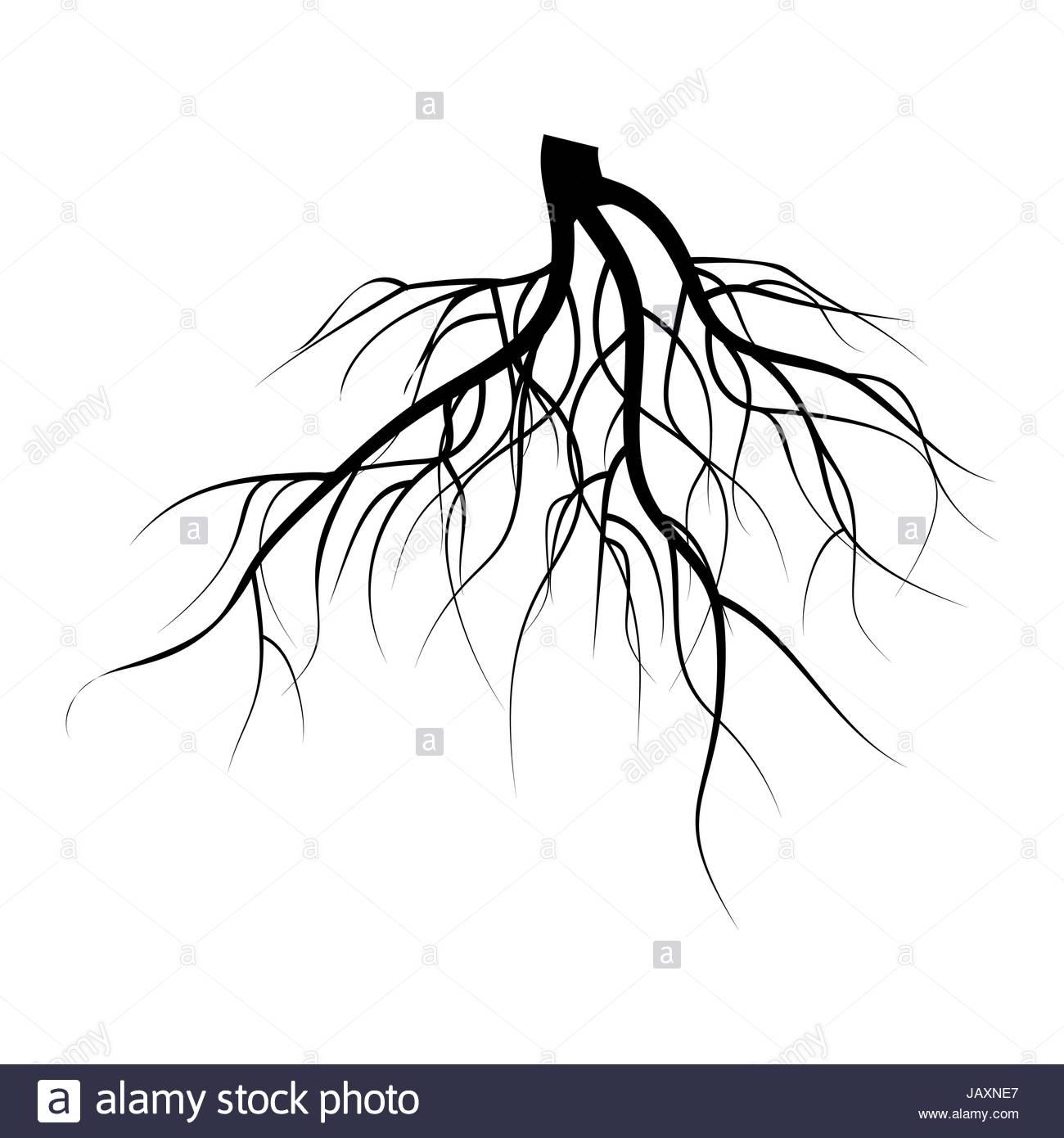 1300x1390 Tree Underground Roots Vector Set. Illustration Isolated Stock