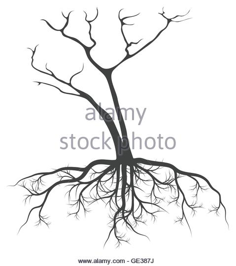 479x540 Black Tree Silhouette Illustration Roots Stock Photos Amp Black Tree