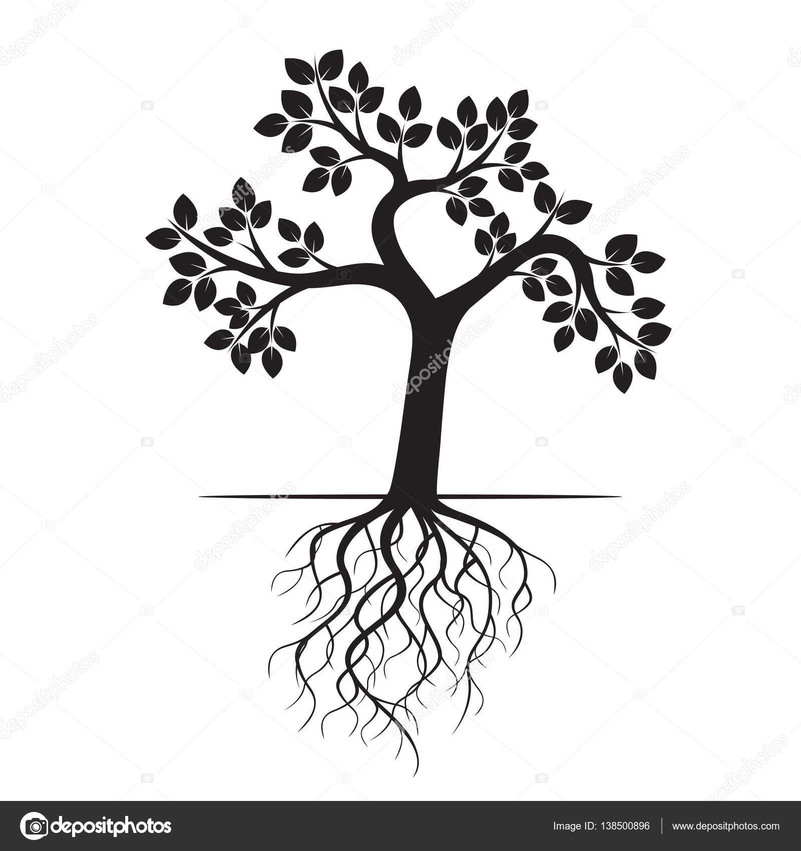 1600x1700 Drawn Roots