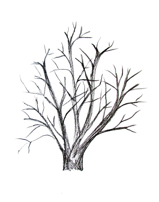 542x690 How To Draw A Tree