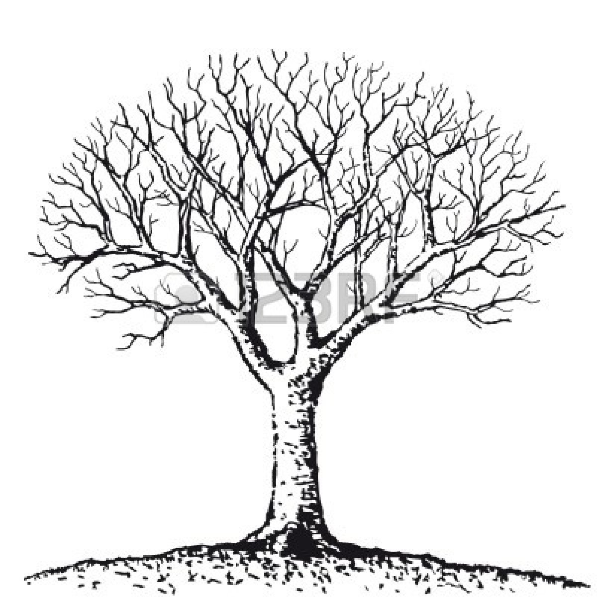 1200x1200 Simple Drawing Of A Tree Simple Black And White Tree Drawing