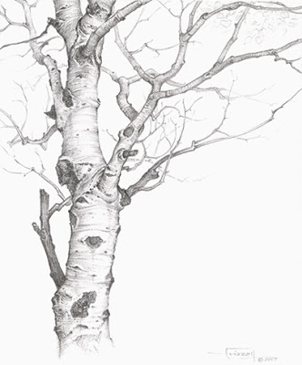 332x400 Tree Drawing Art Meaning