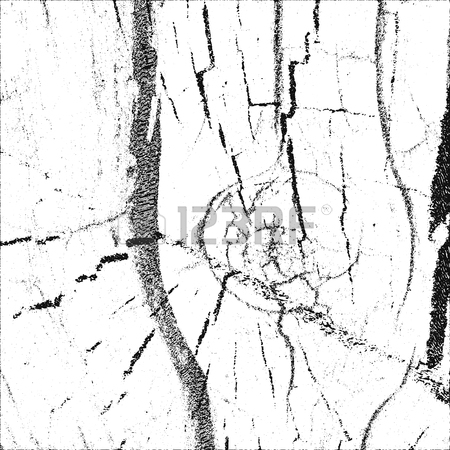 Tree Bark Drawing