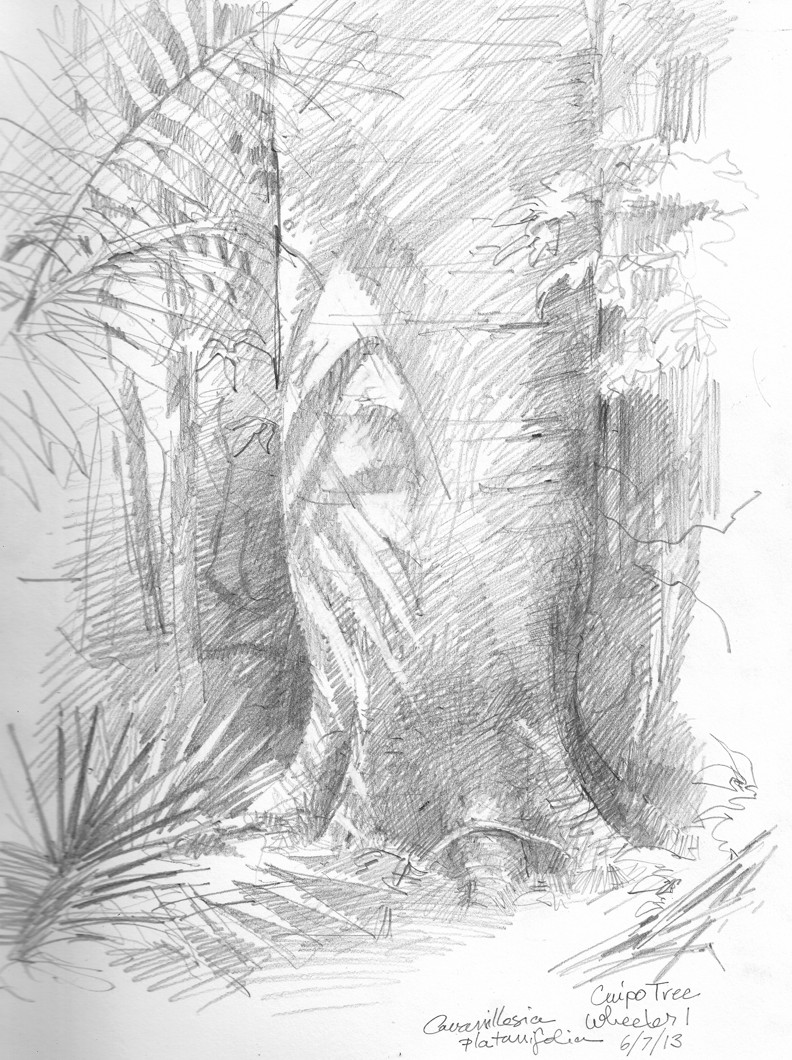 1568x2100 Random Oddities From The Rainforest Planet Drawing The Motmot