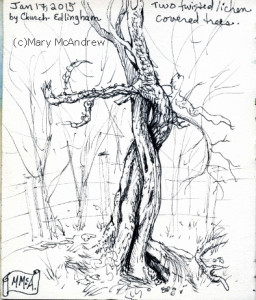 256x300 Tree Sketches + Paintings Mary Mcandrew