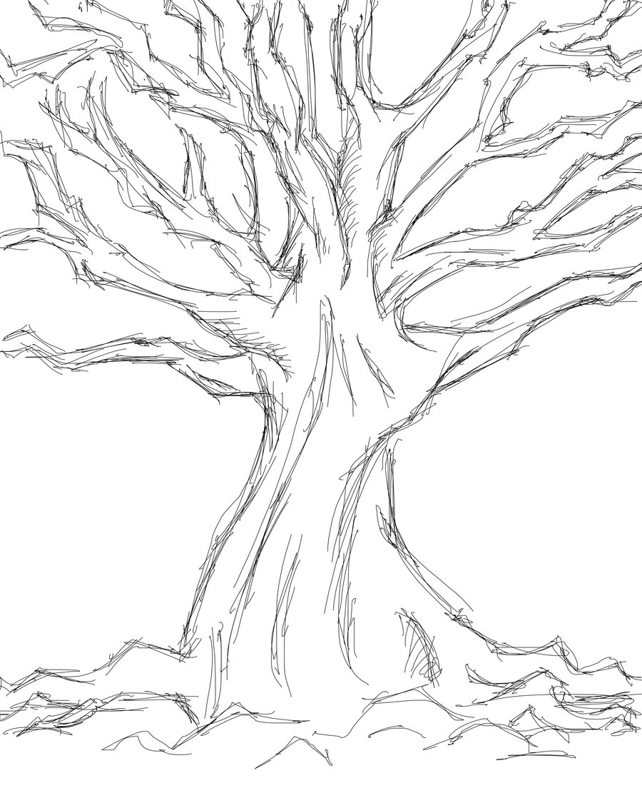 900x1125 Simple Drawing Of A Tree Tree Sketches Drawing Plants