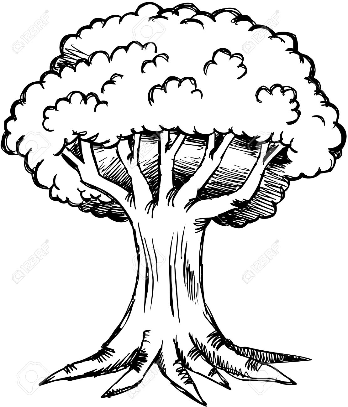 1110x1300 Sketchy Oak Tree Illustration Royalty Free Cliparts, Vectors,