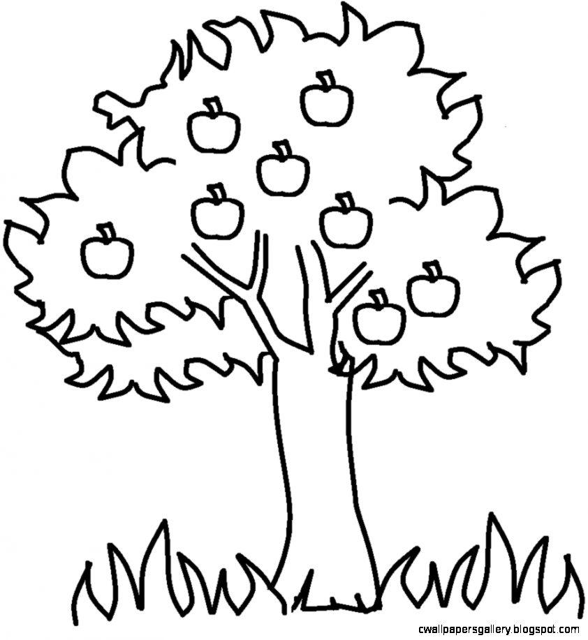 842x917 Tree Drawing Clip Art