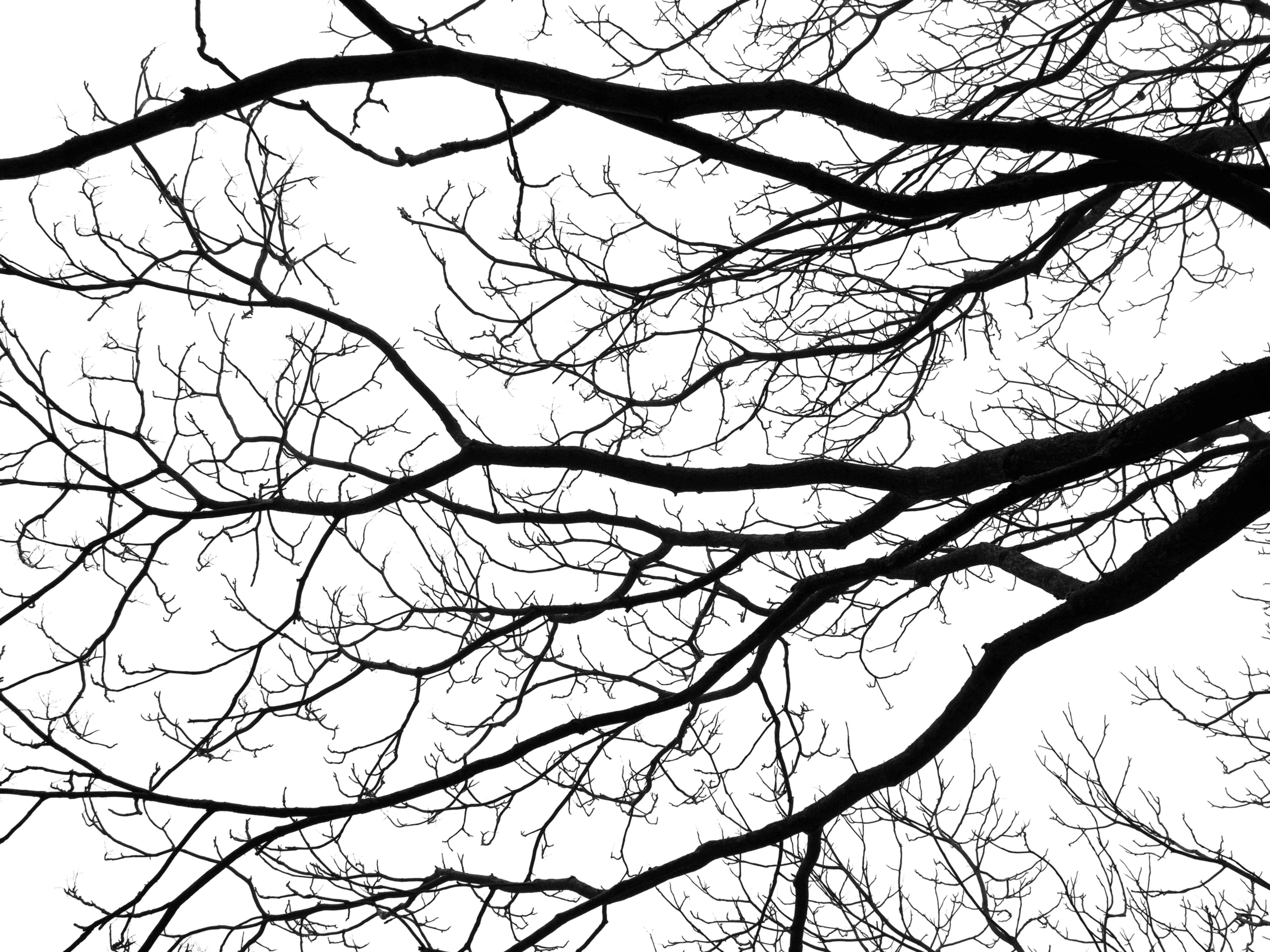4608x3456 Free Images Tree, Branch, Silhouette, Winter, Abstract, Black