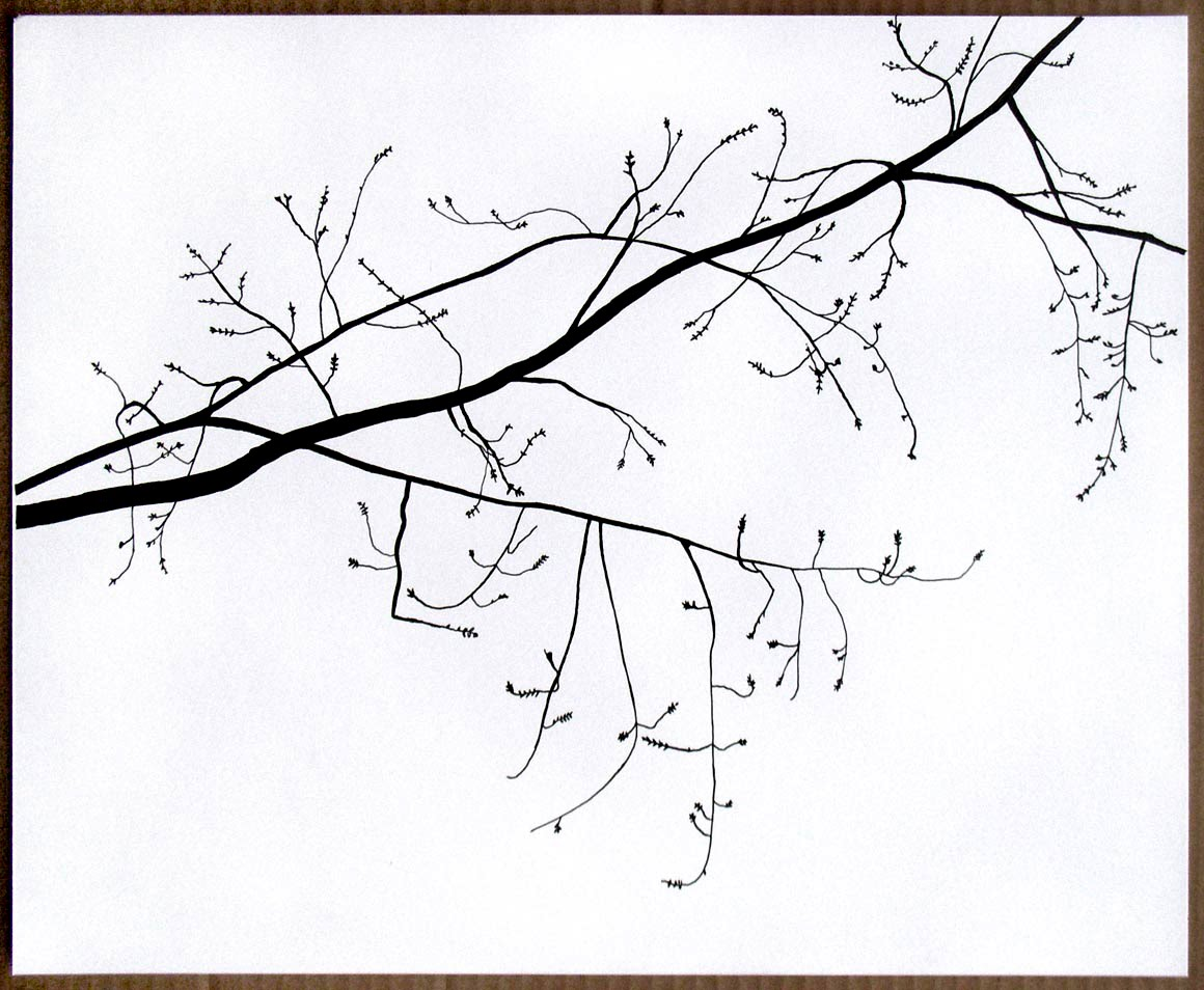 1160x954 Michael Mcguire Branch Drawings (From Observation)