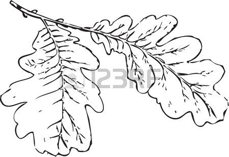 450x309 Tree Branch Oak Leaves Tree Schedule Drawing Sketch Image