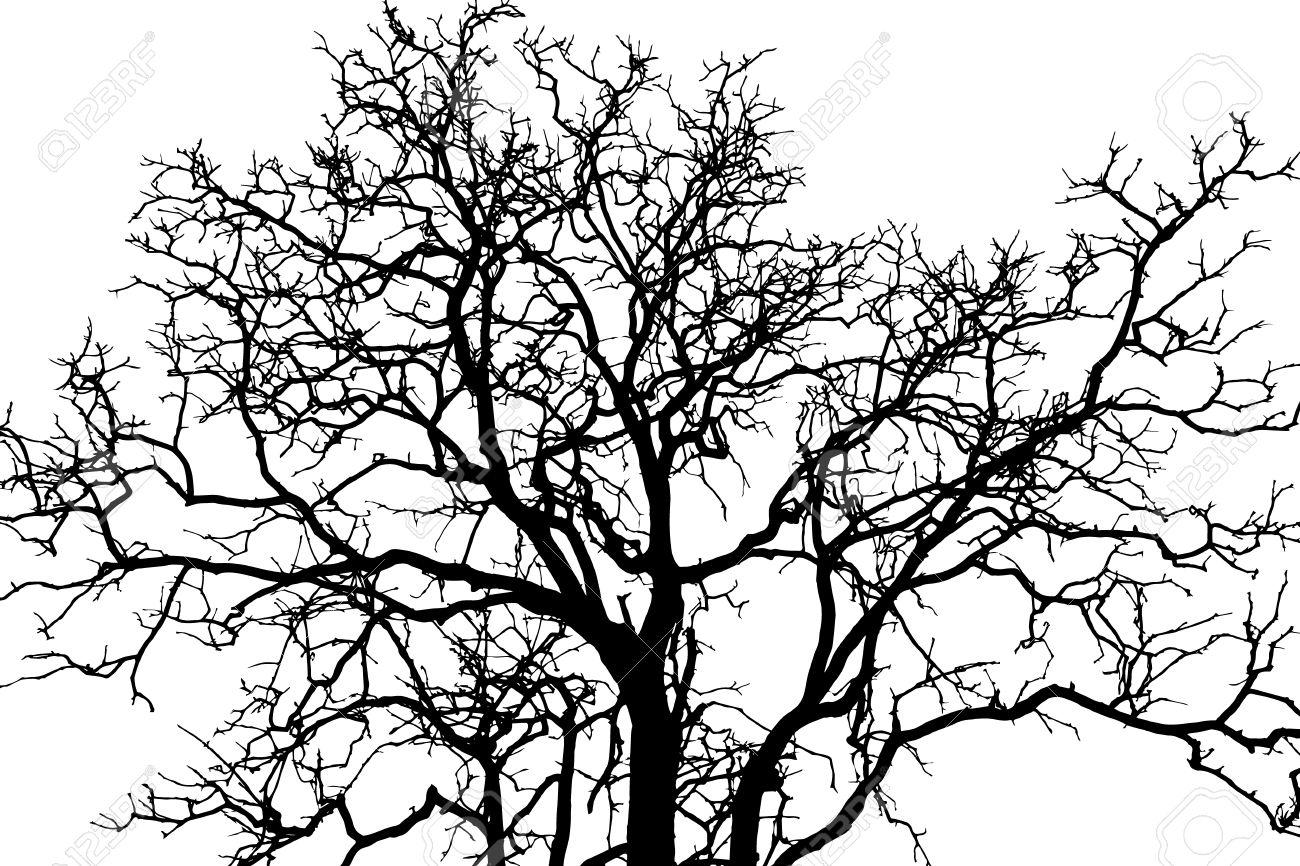 1300x866 Drawn branch shadow tree
