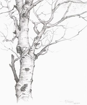 Tree Charcoal Drawing