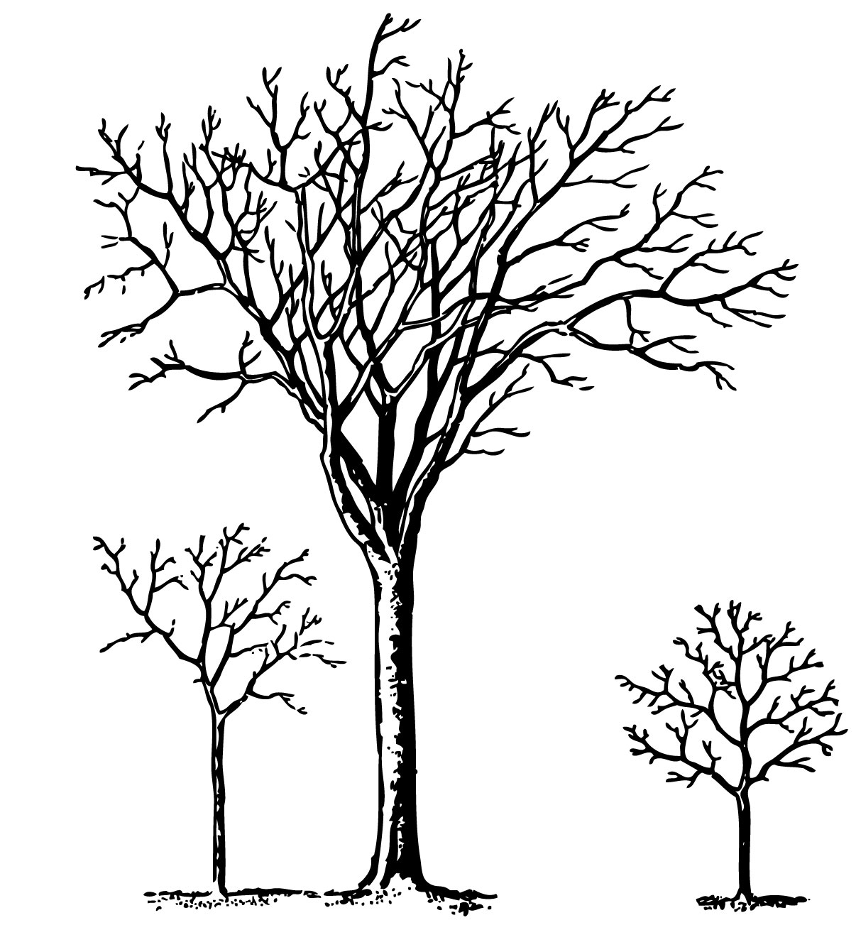 1206x1303 Spooky Tree Drawing Creepy Clipart Dead Tree