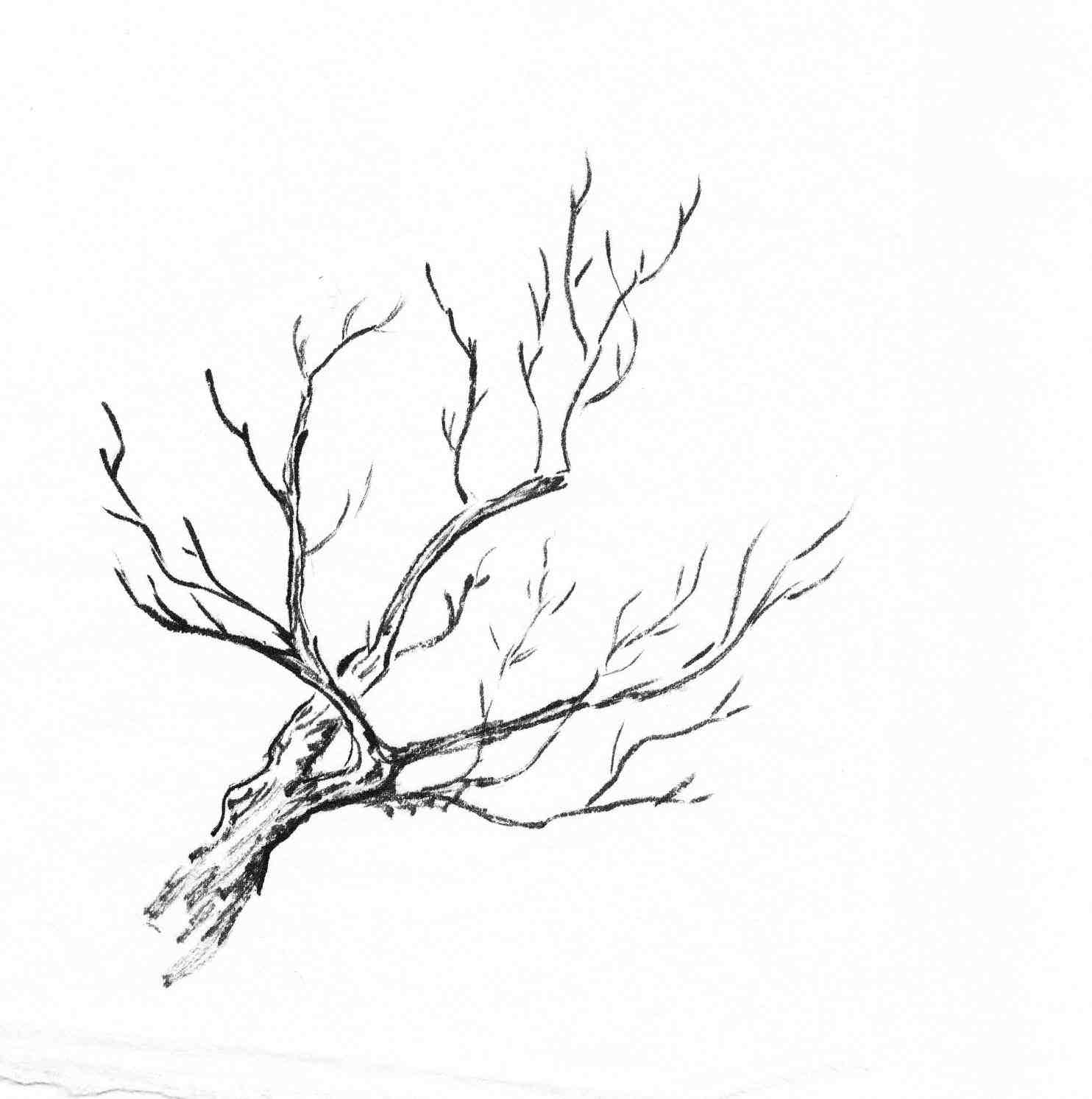 1484x1492 Tree Branches Drawing