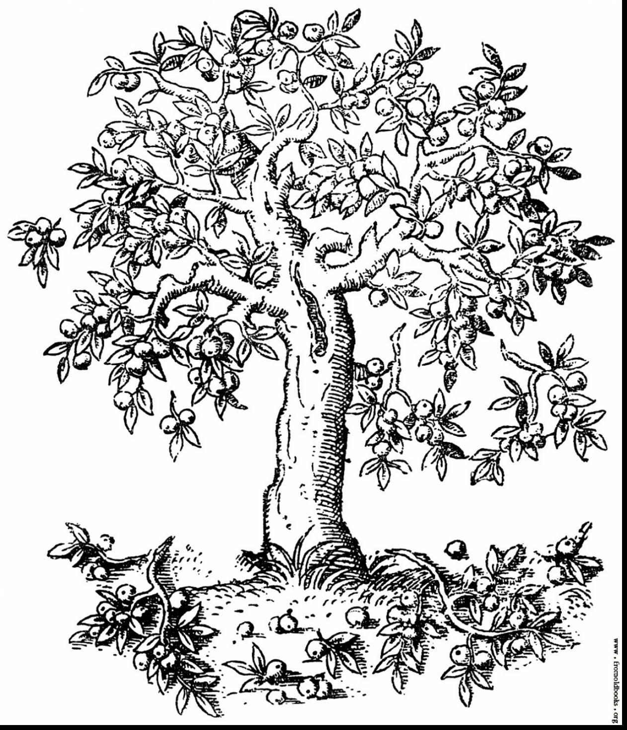 1262x1469 Great Apple Tree Color Page With Apple Tree Coloring Page