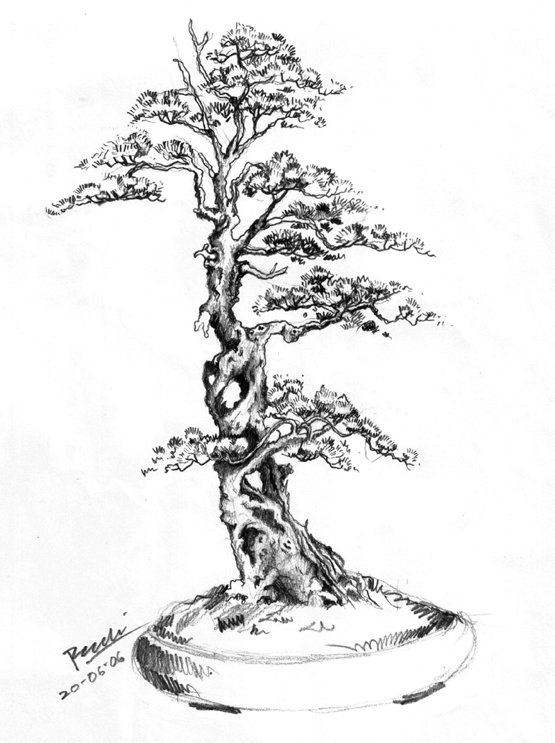 800x1071 Bonsai Tree Drawing Drawn Tree Bonsai Tree