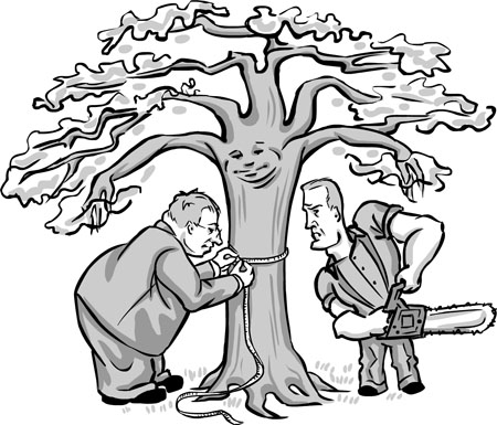 450x385 Heritage Tree Ordinance Takes Root Tree lovers stand their ground