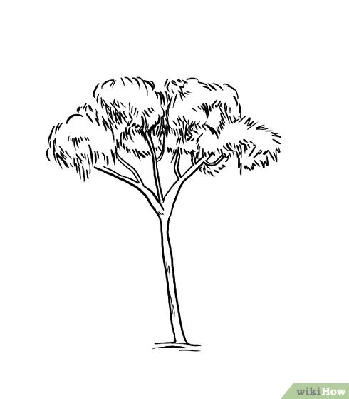 490x559 How to Draw a Gum Tree 8 Steps (with Pictures)
