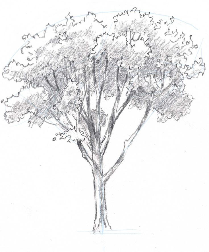 735x885 Best 25+ Trees drawing simple ideas on Pinterest Tree drawing