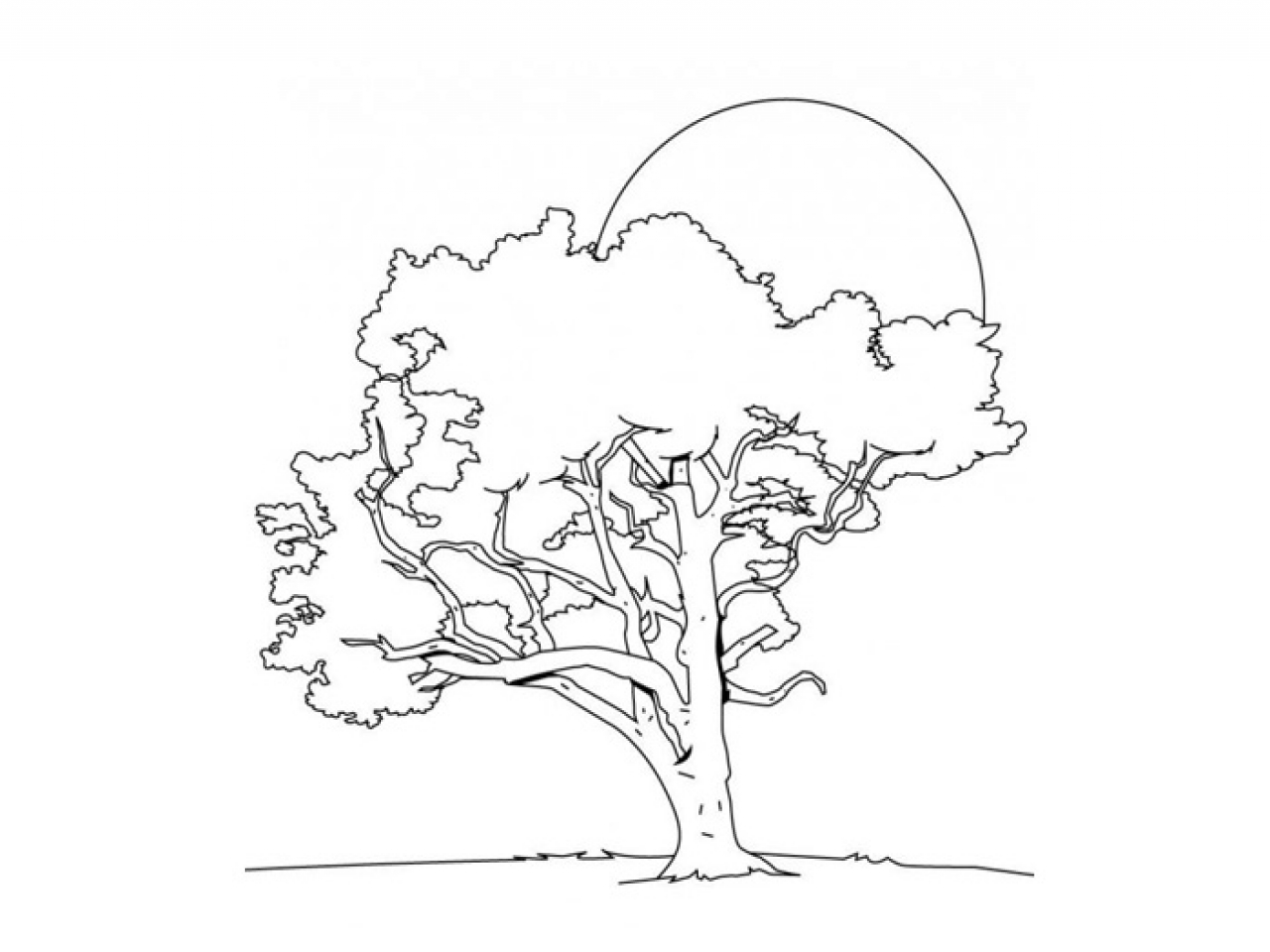 1280x960 Cartoon Tree Coloring Ohio State Page