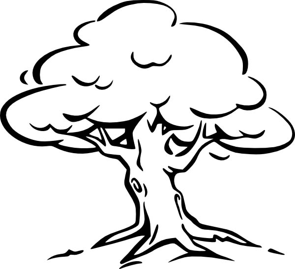 600x548 Oak Tree, Oak Tree Coloring Page For Kids Coloring Pages