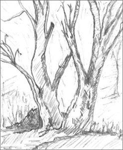 247x300 Easy Tree Drawings